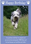 "Bearded Collie-Happy Birthday - ""I'm Adopted"" Theme"